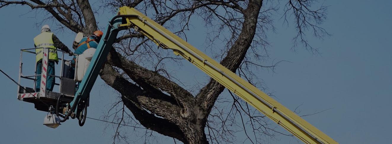 Johnson City Tree Care